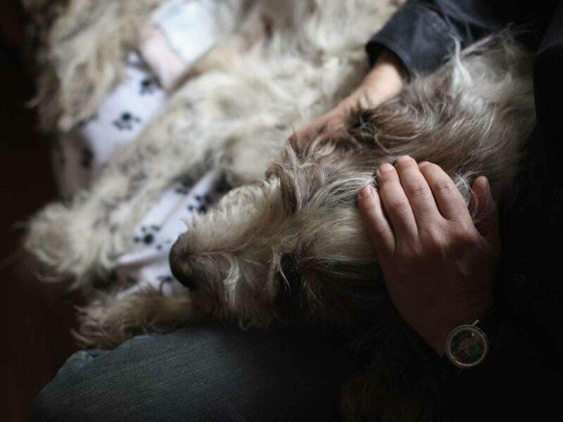 Юридические способы определить судьбу домашнего животного